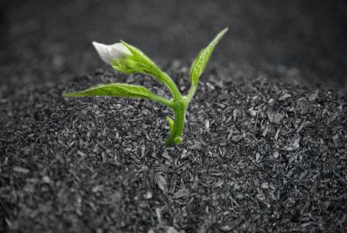 L'importanza del suolo per affrontare la crisi climatica