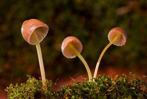mushroom-2949539_1920